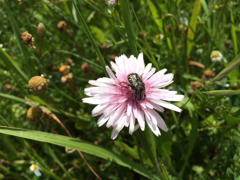 Insect op een bloem royalty-vrije stock afbeelding
