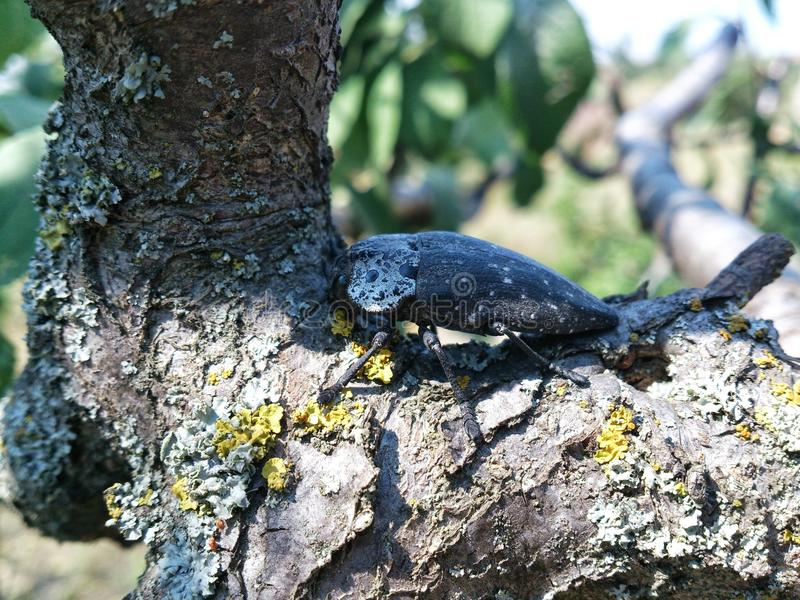 Insect op een boom stock fotografie