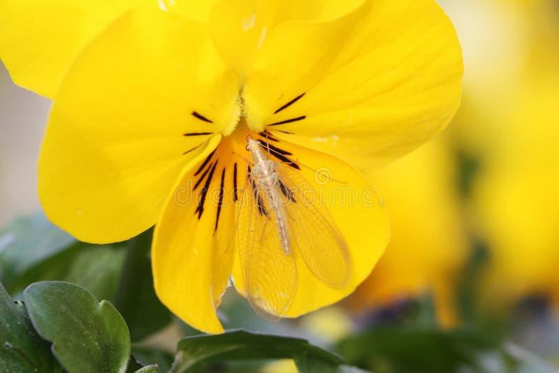 Insect op een gele bloem stock foto
