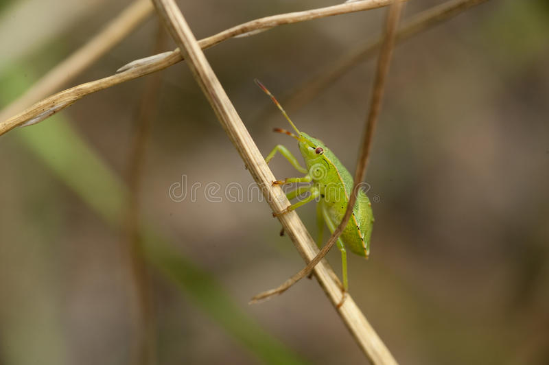 Insect op een installatie royalty-vrije stock fotografie