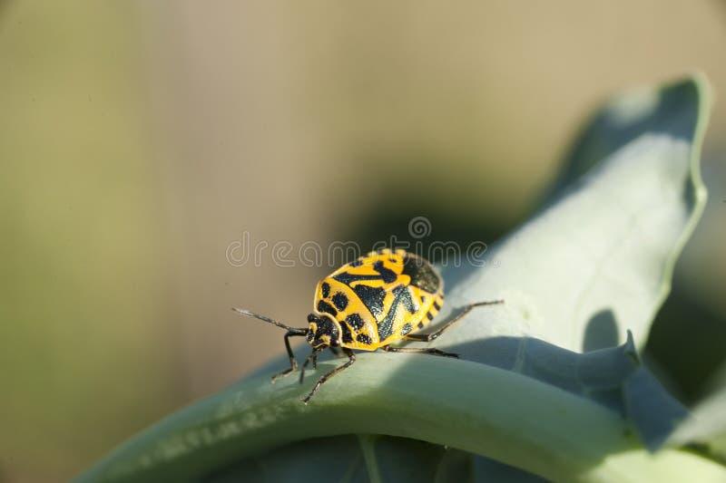 Insect op een plan royalty-vrije stock afbeelding