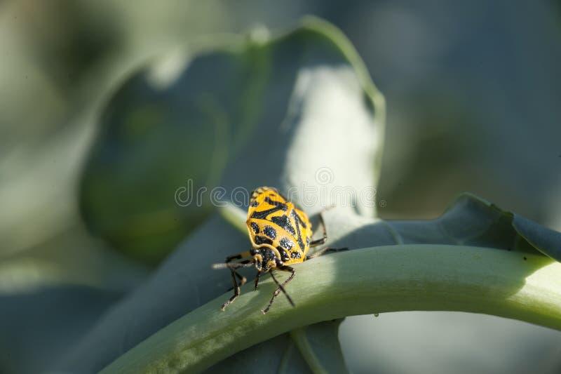 Insect op een plan stock foto