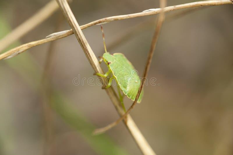 Insect op een plan stock foto's