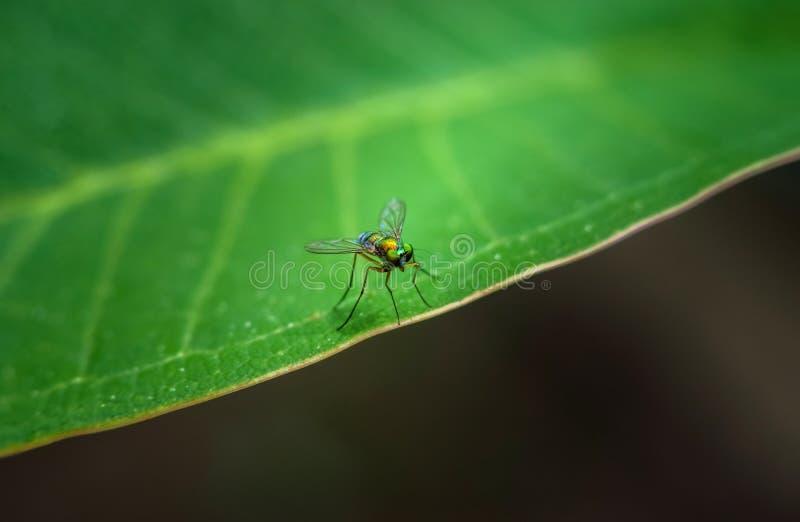 Insect op groen blad, behangstijl stock foto