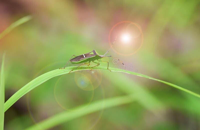 Insect op het grasblad royalty-vrije stock afbeeldingen