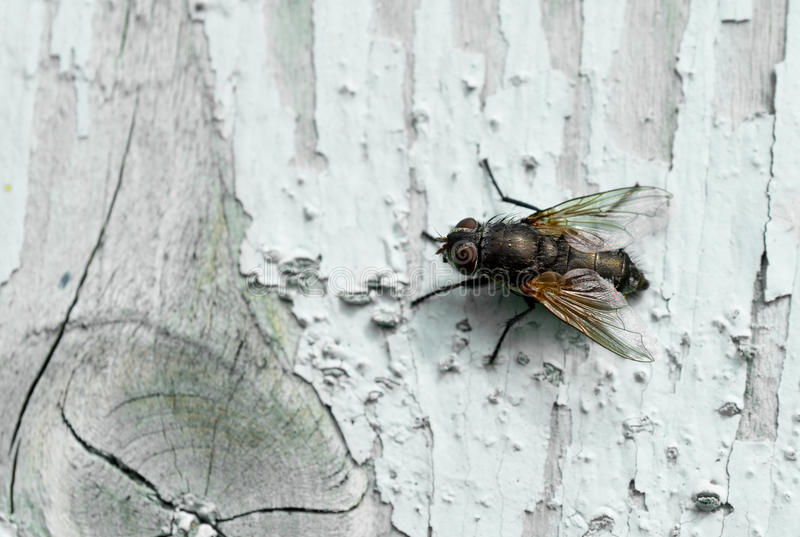 Insect op hout royalty-vrije stock afbeelding