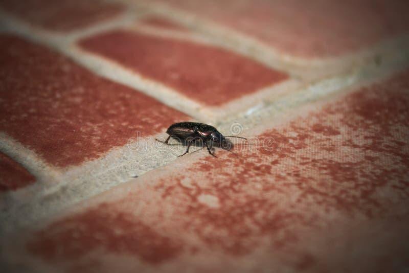 Insect op tegels stock afbeelding