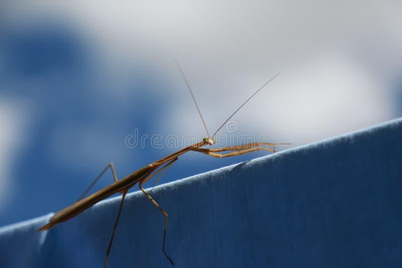Insect op waslijn royalty-vrije stock foto