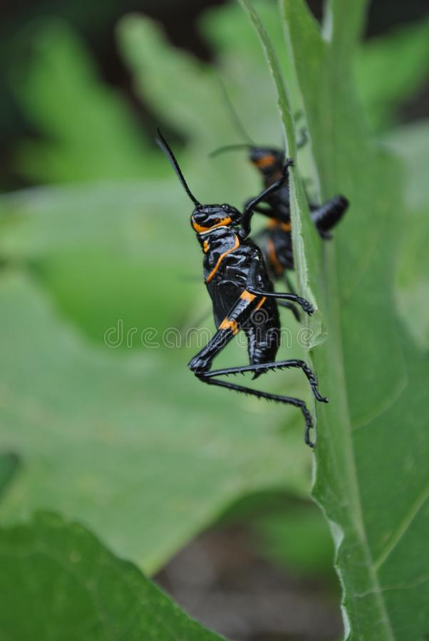 Insect, Pest, Invertebrate, Membrane Winged Insect stock image