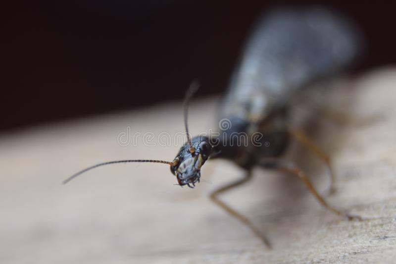 Insect, Pest, Invertebrate, Membrane Winged Insect royalty free stock image