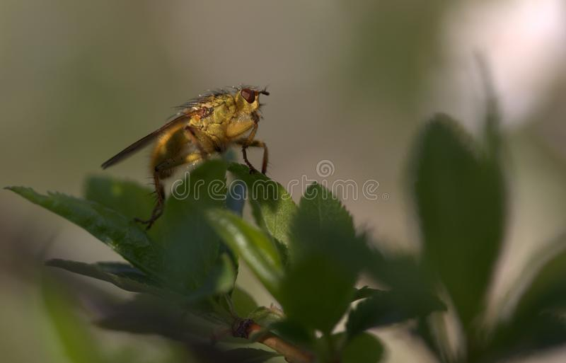 Insect, Pest, Membrane Winged Insect, Invertebrate stock images
