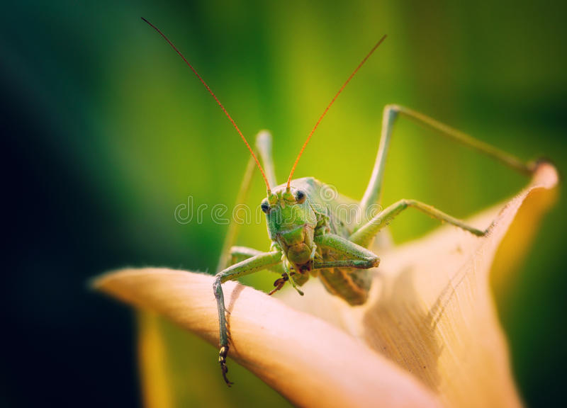 Insect. Photographed in my garden royalty free stock photography