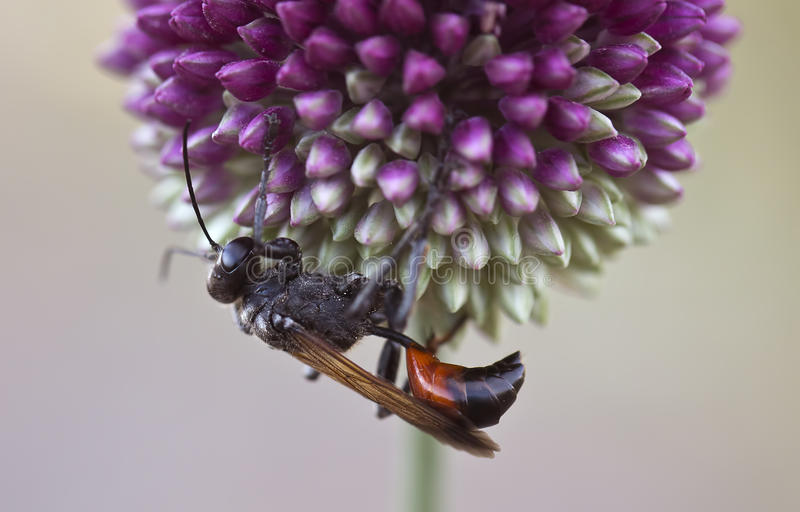 The Insect and Plant. A close-up of an insect and plant stock images