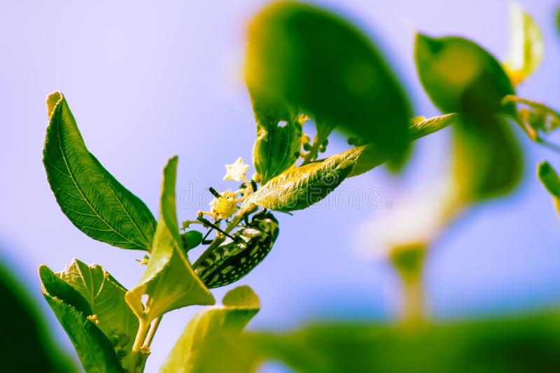 Insect on the plant side stock photo