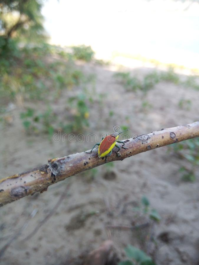 Insect in Roemenië stock afbeeldingen