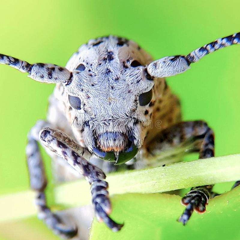 Insect` s gezicht stock fotografie