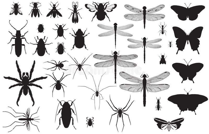 Insect silhouettes stock image