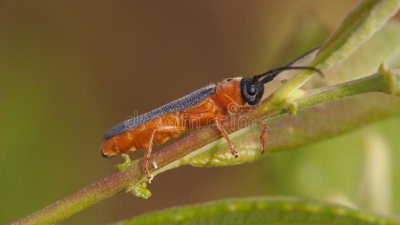 Insect on a leaf,Insect on a leaf stock photo
