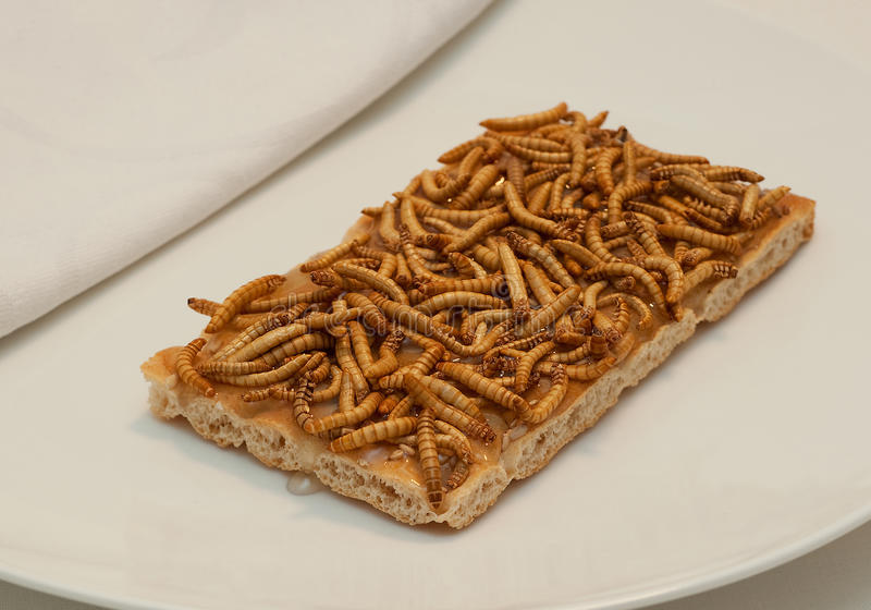 Insect Snack stock images