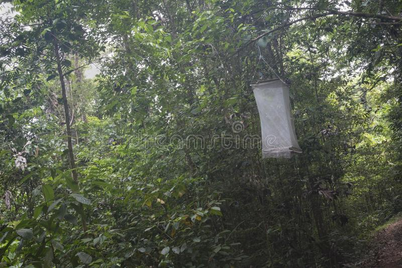 Insect trap, French Guiana royalty free stock photography