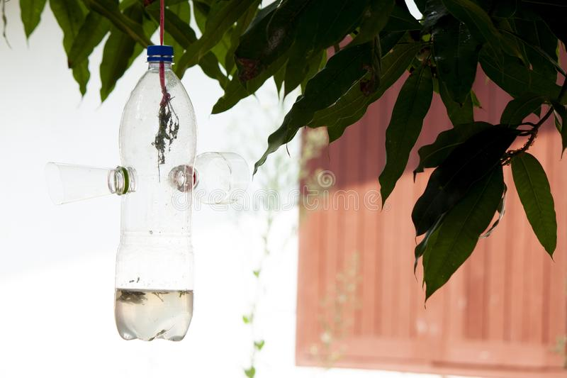 Insect trap on tree. royalty free stock photos