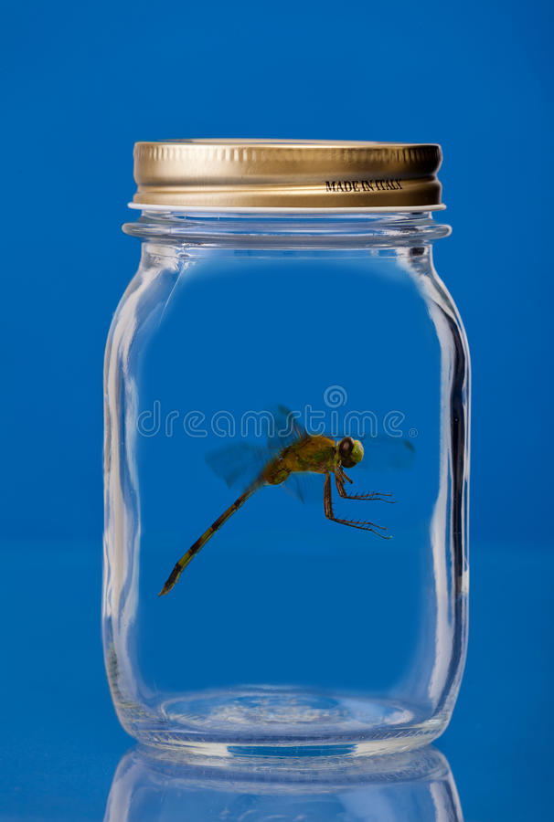 Insect trapped in a jar royalty free stock images