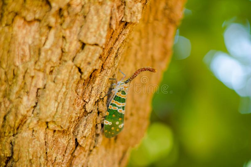 Insect on the tree royalty free stock photos