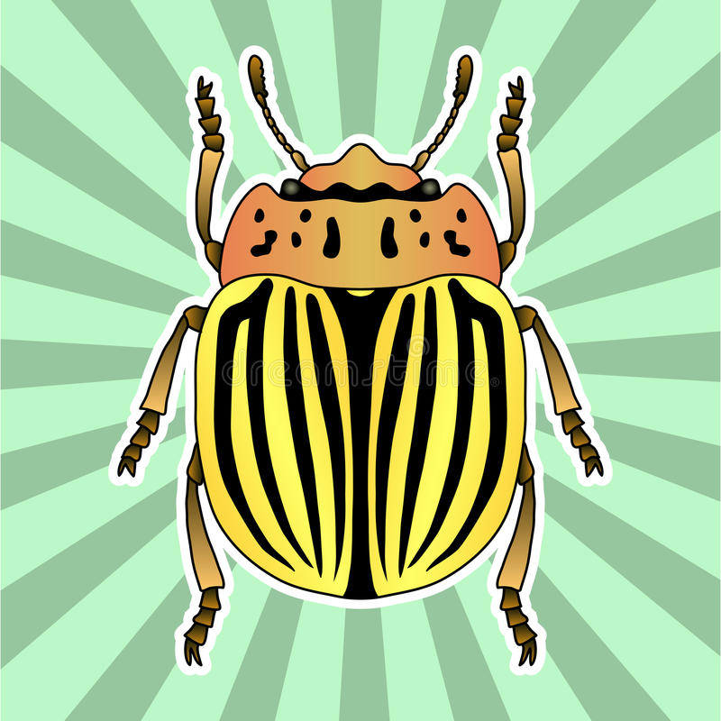 Insectanatomie De coloradokever van stickercolorado Leptinotarsadecemlineata Schets van de coloradokever van Colorado royalty-vrije illustratie