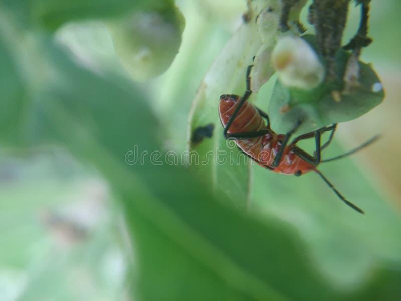insecte image libre de droits