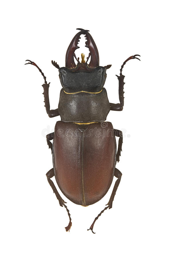 Insecte images stock