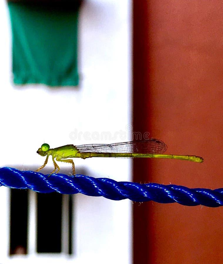 insecte photos libres de droits