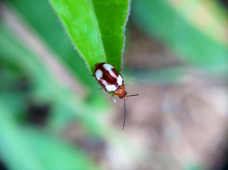 Download Insecte photo stock. Image du insecte, nature, lame, vert - 45363302