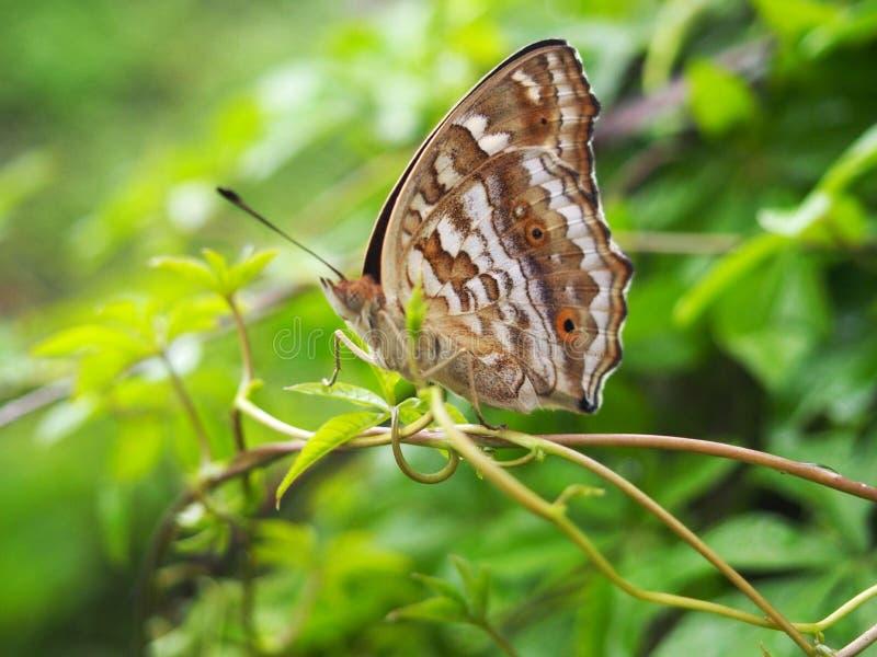 Download Insecte photo stock. Image du nature, lame, vert, insecte - 45368664