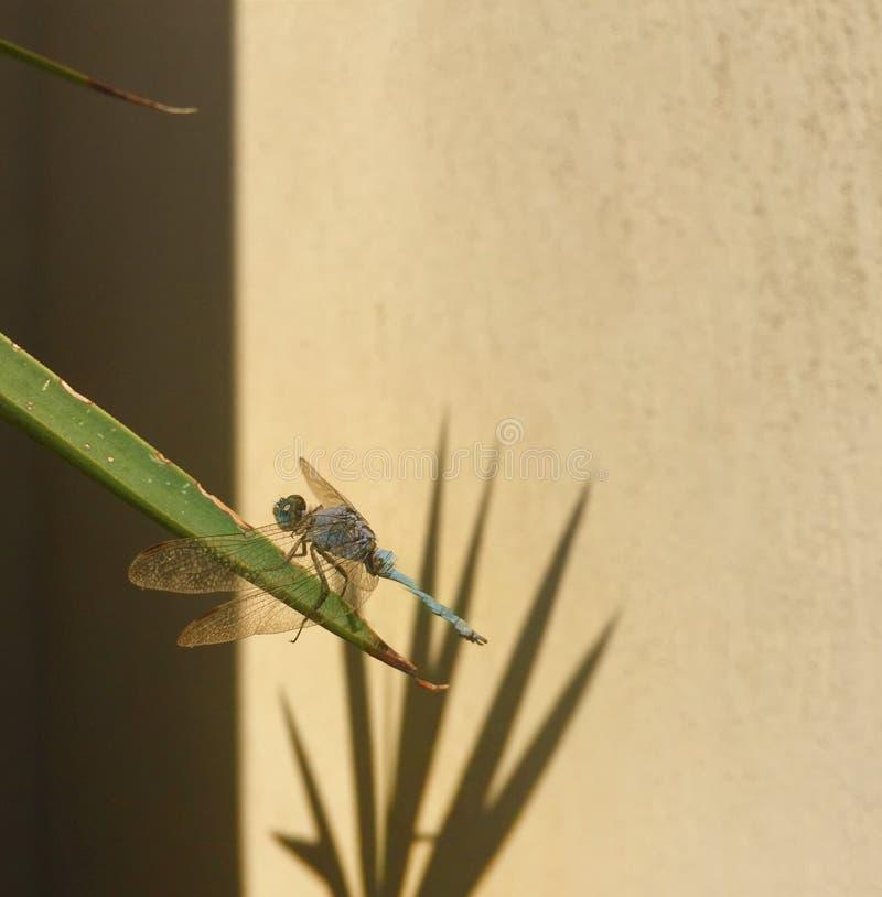 insecte photo libre de droits