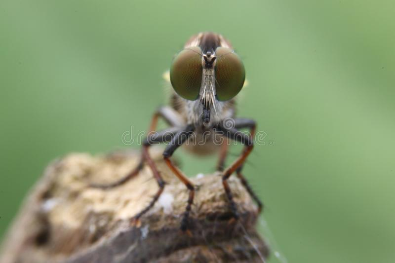insecte image stock