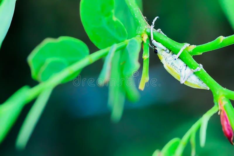 insecte photo stock