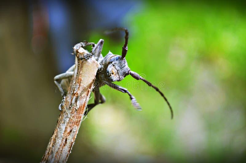 Insecte amical image libre de droits