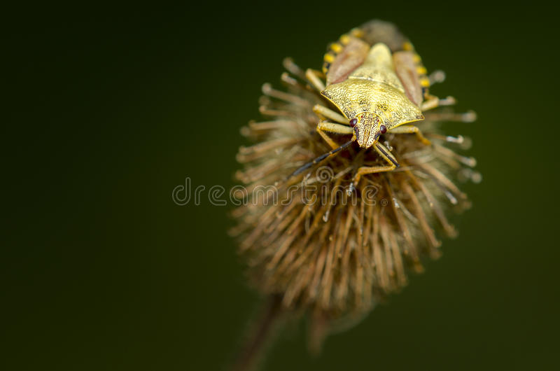 Insecte curieux photos libres de droits
