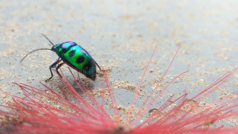 Insecte d'arc-en-ciel photo stock