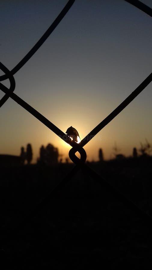 Insecte dans le lever de soleil image libre de droits