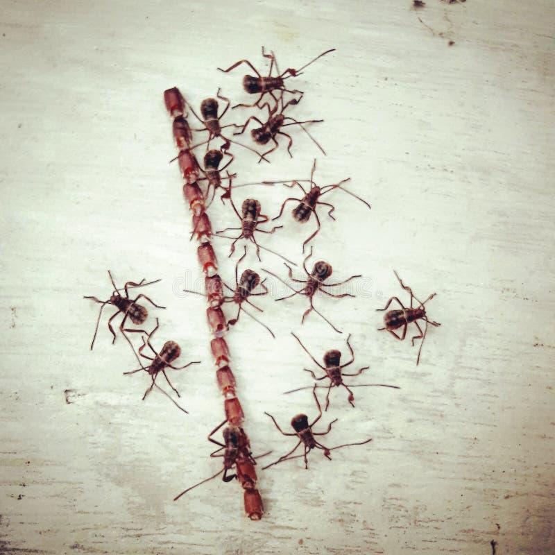 Insecte de baisers photo stock