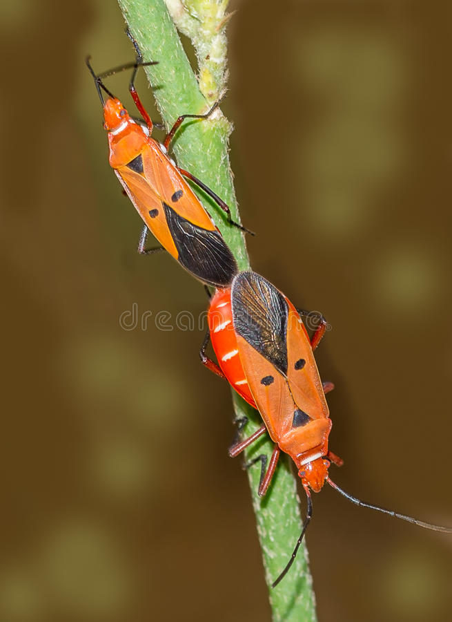 Insecte de bijou photo libre de droits