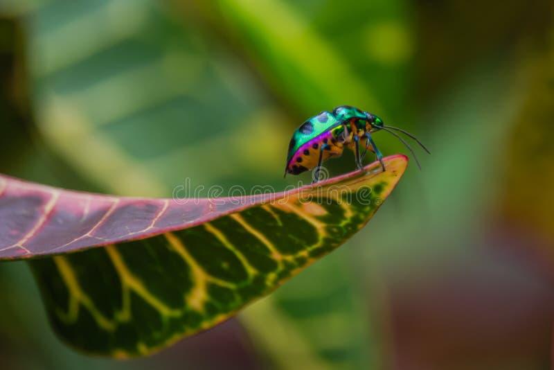 Insecte de bijou photographie stock libre de droits