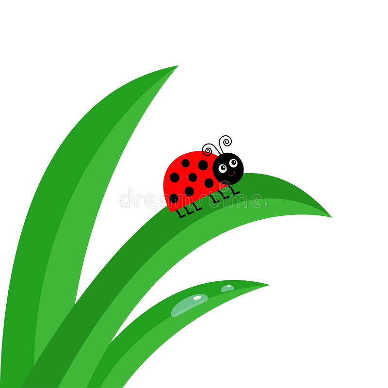 Insecte de coccinelle de Ladybird Fin fraîche de tige d'herbe verte  illustration stock