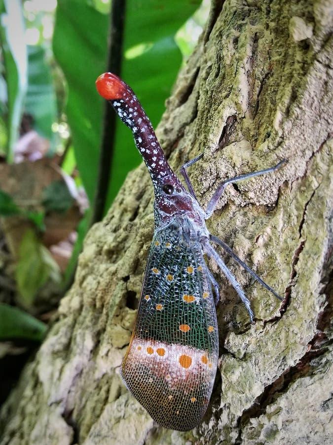 Insecte de lanterne image libre de droits