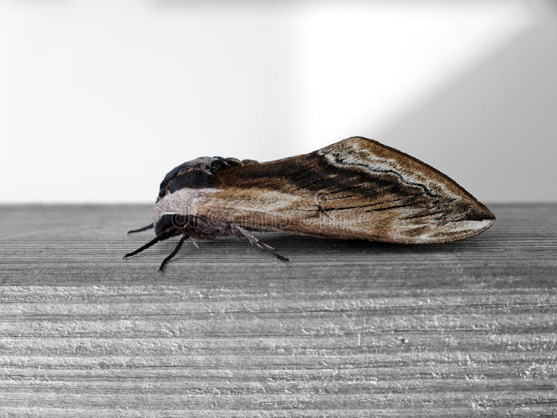 insecte du bois elegant traitement du bois contre les fourmis charpenti re valais vaud suisse. Black Bedroom Furniture Sets. Home Design Ideas