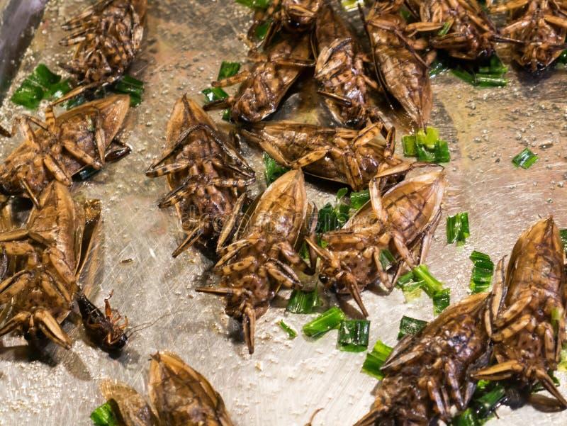 Insecte frit images libres de droits