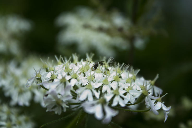 Insecte jouant le cache-cache photographie stock