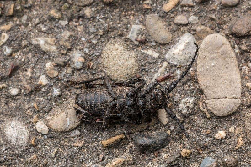 Insecte mort au sol pierreux froid photographie stock