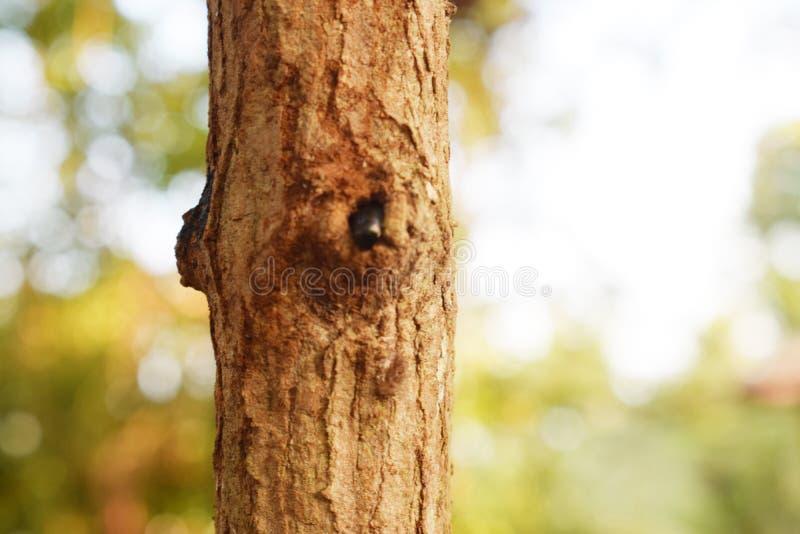 Insecte pénétrant un arbre vuln?rabilit?s moyen de correction de bugs photo libre de droits